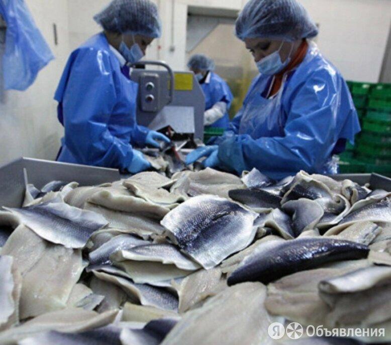 Фасовщик на рыбное производство ( Вахта в Московскую область) - Фасовщики, фото 0