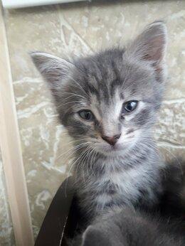 Кошки - Маленькие серенькие котята, 4 штуки. Отдам в…, 0