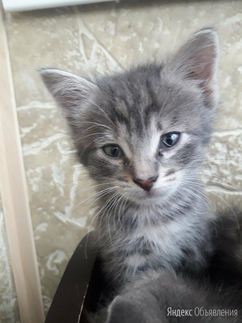 Маленькие серенькие котята, 4 штуки. Отдам в хорошие руки!  по цене даром - Кошки, фото 0