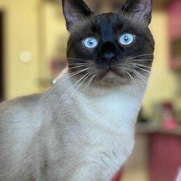 Кошки - Котята, Тайские котята, 0