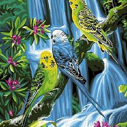 Птицы - Волнистые попугайчики Артикул : GX 37637, 0