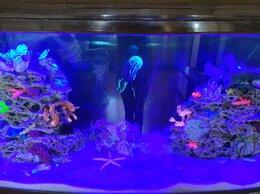 Оборудование для аквариумов и террариумов - Светодиодный модуль синего цвета, 0