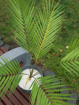 Искусственные растения - Искусственные растения Пальма, 0