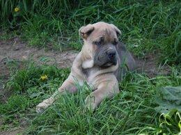 Собаки - Редкие окрасы, 0