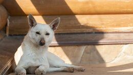 Собаки - Небольшая собачка Тамлин ждёт семью. Лесной приют, 0