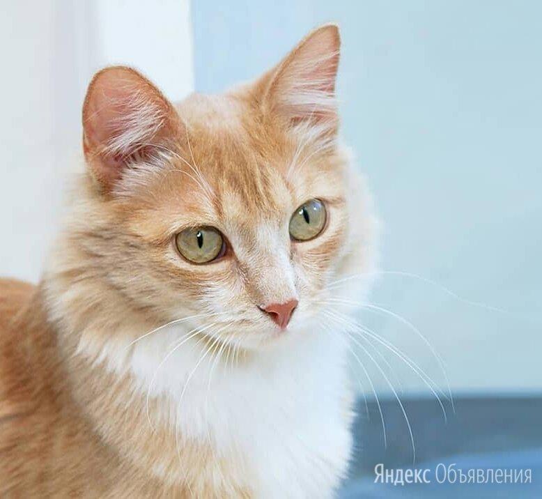 Кот в добрые руки по цене даром - Кошки, фото 0