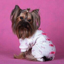 Одежда и обувь - комбинезон красивый костюм для собаки, 0
