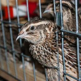 Птицы - Перепелочки под ключ для дома- 35, 0