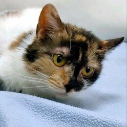 Кошки - Кошечка с уникальным окрасом Калико , 0