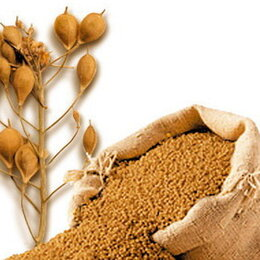Семена - Продам семена рыжика, 0