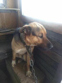 Собаки - Отдам в хорошие руки в связи со смертью хозяина, 0