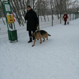 Услуги для животных - Дрессировка собак, 0
