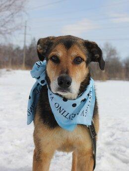 Собаки - Собака для семьи в добрые руки из приюта, 0