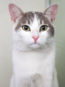 Кошки - Любопытный малыш Артемий, которого спасли с…, 0