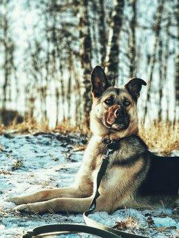 Собаки - Спасите собаку из приюта, 0