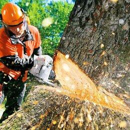 Сфера услуг - Спил деревьев/Удаление пней/Расчистка участков, 0