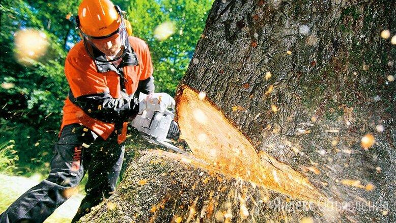 Спил деревьев/Удаление пней/Расчистка участков по цене 50₽ - Сфера услуг, фото 0