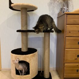 Когтеточки и комплексы  - Когтеточки для любимых котиков и кошечек. , 0