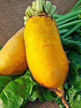 Семена - Семена свекла кормовая эккендорфская желтая, 0