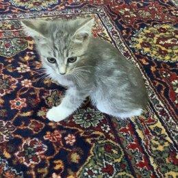 Кошки - Домашние коты, 0