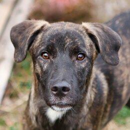 Собаки - Щенок-подросток Бомбик ищет дом, 0