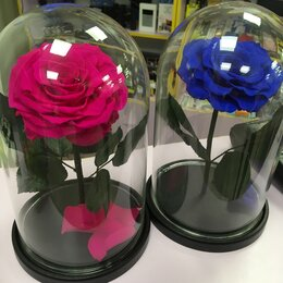 Комнатные растения - Живая роза в колбе VIP размер , 0