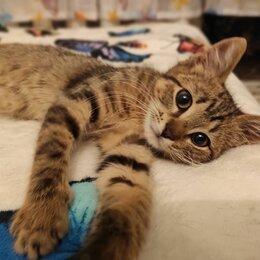 Кошки - Котенок  3 мес.ищет дом,был спасён с улицы, 0