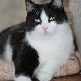 Кошки - Котик Петруша, 0