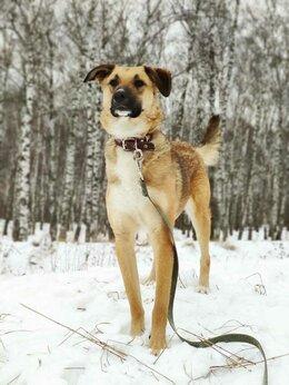 Собаки - Озорная Мегги в добрые руки, 0