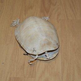 Рептилии - Скелет черепахи. Возможна бесплатная доставка , 0