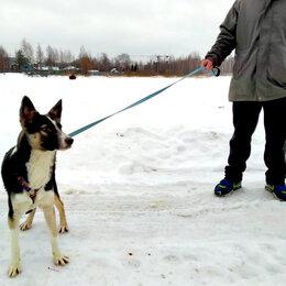 Собаки - Щенок Барни ищет дом и семью, 0
