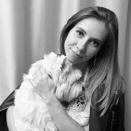 Груминг и уход - Стрижка собак и кошек, 0