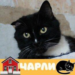 Кошки - Кот Чарли, 0