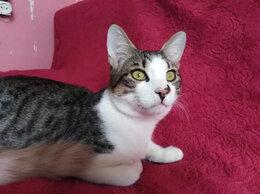 Кошки - Котик Серега ищет родственную душу и дом, 0