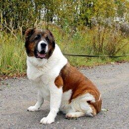 Собаки - ЧУПА - семейная собака в дар, 0
