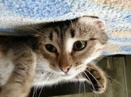 """Кошки - Кошечка из """"бапкиной квартиры"""" все равно верит в…, 0"""