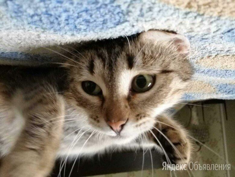 """Кошечка из """"бапкиной квартиры"""" все равно верит в свою счастливую судьбу... по цене даром - Кошки, фото 0"""