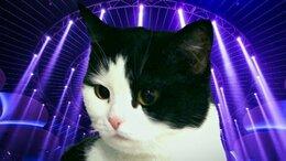 Кошки - ищет дом, 0