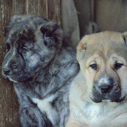 Услуги для животных - Купировка ушей и хвостов щенкам, 0