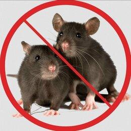 Дезинфицирующие средства - Уничтожение Мышей и Крыс, 0