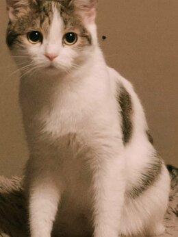 Кошки - Муся, 0