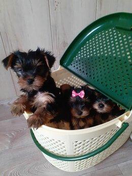 Собаки - Продаем щенков Йорка., 0