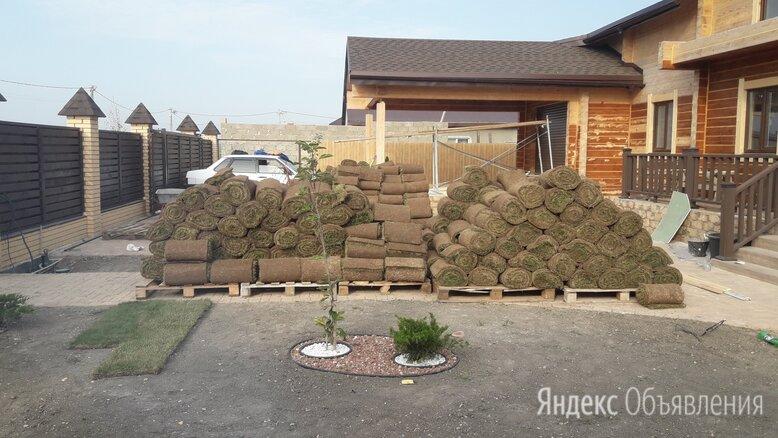 Трава газона по цене даром - Газоны, фото 0