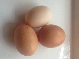 Продукты - Яйца домашние куриные, 0