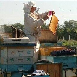 Продукты - Мёд, 0
