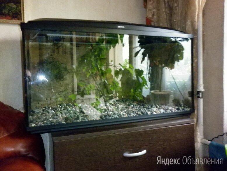 Аквариум Aquael 200 литров с объёмным фоном по цене 19000₽ - Аквариумы, террариумы, тумбы, фото 0