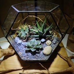 Субстраты, грунты, мульча - Грунт и декор для растений - суккулентов, орхидей, 0
