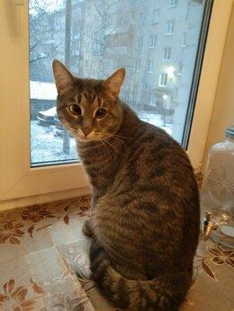 Животные - Помогите найти кота!!!, 0