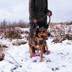 Мишутка ищет дом  по цене даром - Собаки, фото 12