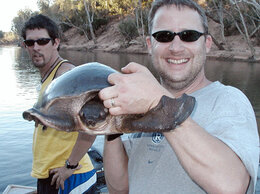 Рептилии - Большая черепаха для большого аквариума, 0